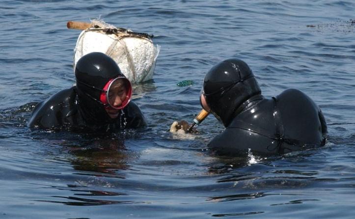 jeju island woman divers 5