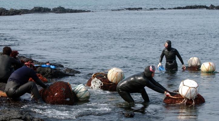 jeju island woman divers 6