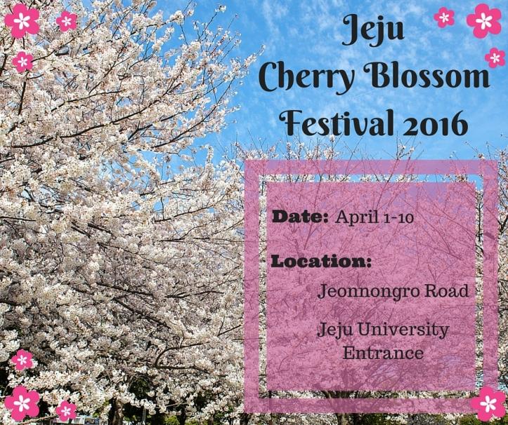 Jeju Cherry Blossom Festival 2016